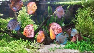 Aquarium Du Nord